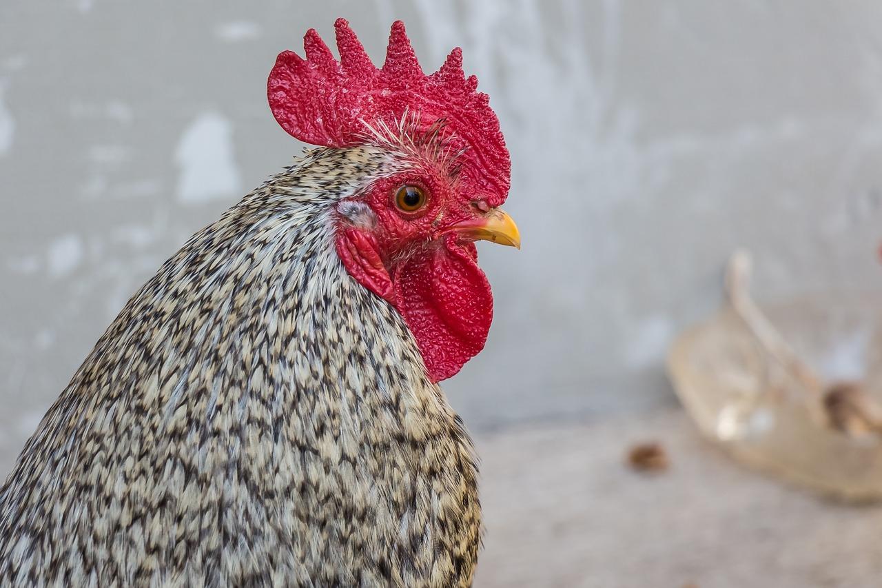 Powrót ptasiej grypy zablokował wiele rynków eksportowych
